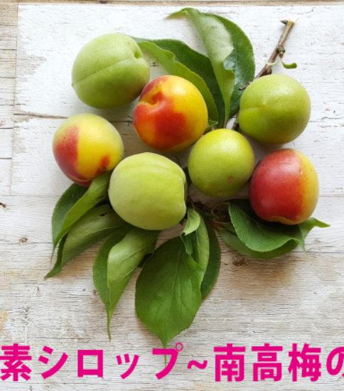 酵素シロップの会~南高梅&体温上昇プログラム説明会~6/21